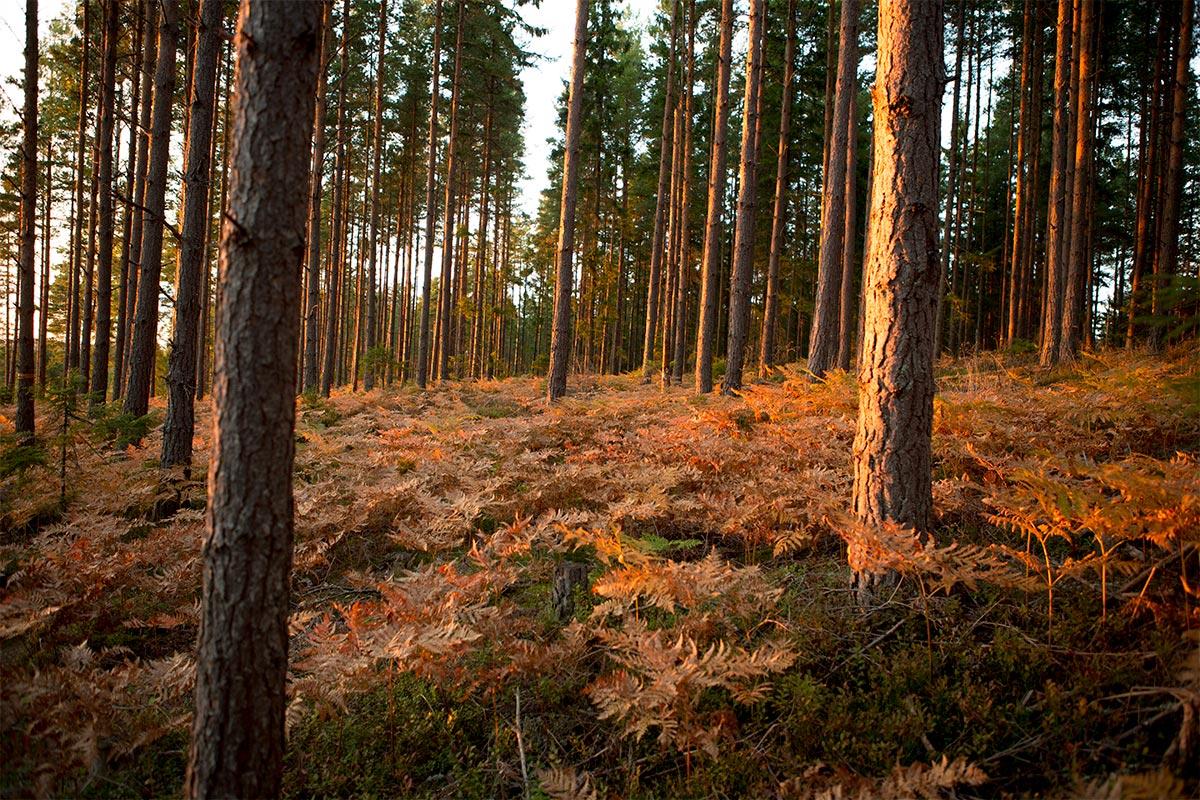 Höstfärger i skogen