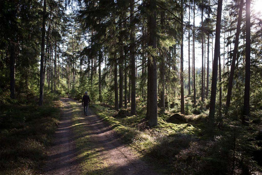 Wandeling in de herfst