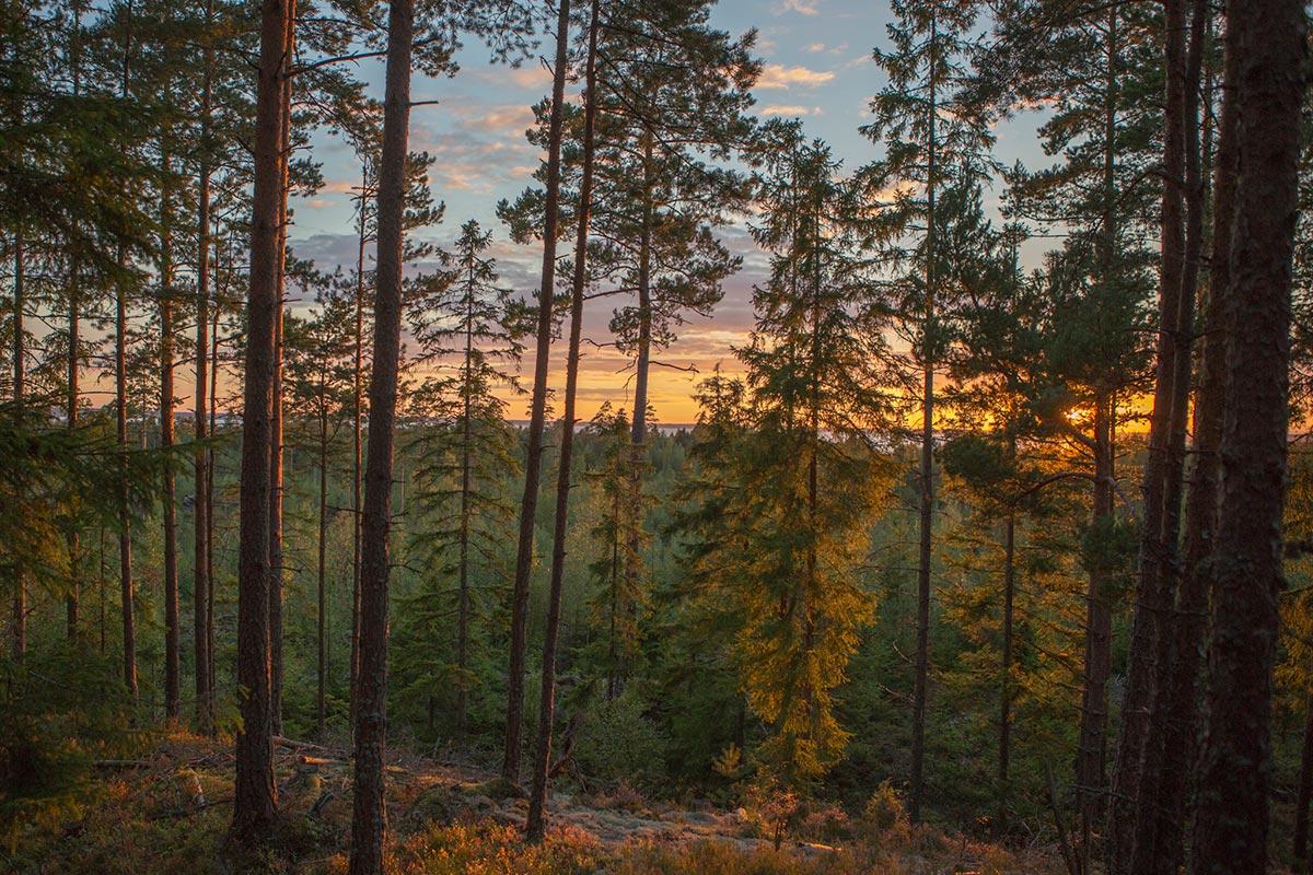 Höst i skogen vid Hamgården