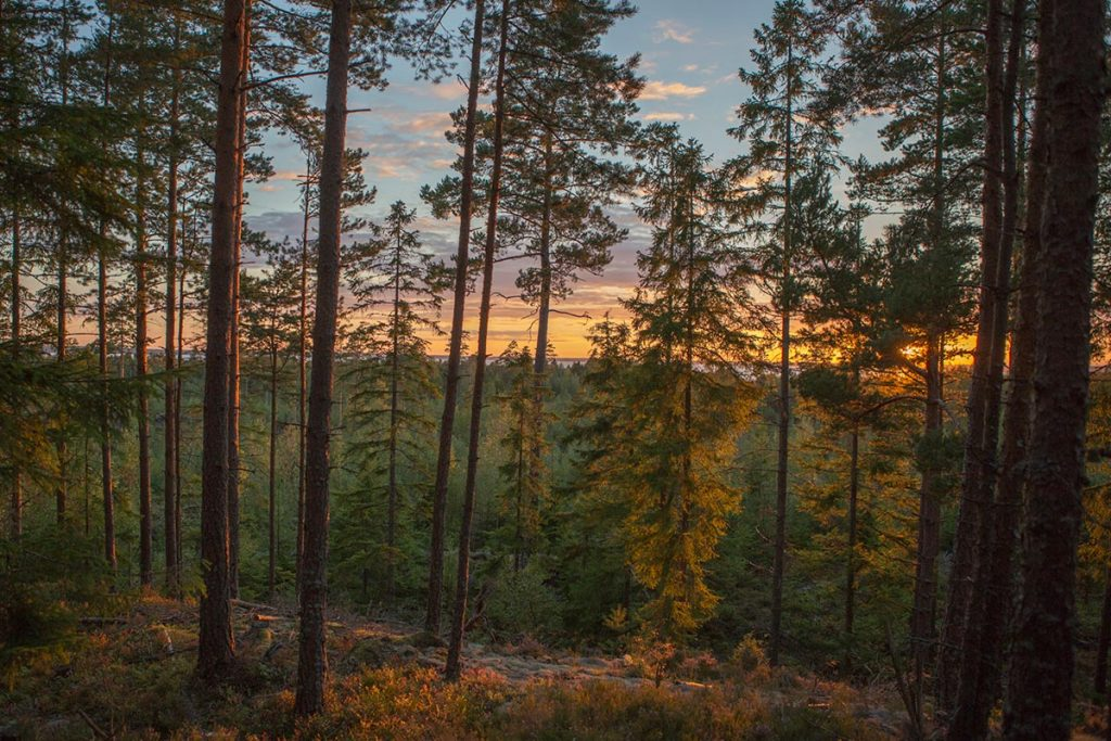 Herbst bei Hamgården